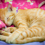 Little Joey takes a snooze 😺 thumbnail