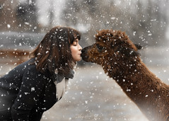 Kiss (Kinga Pakula PHOTOGRAPHY) Tags: kingapakulaphotography alpaca alpaga friends lovely captureyourdreamsphotographyluxembourg childphotographyluxembourg