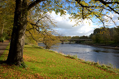 By the river at Preston (Tony Worrall) Tags: avenhampark avenham seasonal park green nature outside greenery preston lancs lancashire city welovethenorth nw northwest north update place location uk england visit area attraction open stream tour country item greatbritain britain english british gb capture buy stock sell sale outdoors caught photo shoot shot picture captured ilobsterit instragram riverribble river water wet beauty scene serene scenery