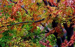 """Cincinnati - Spring Grove Cemetery & Arboretum """"An Autumn Mash-Up"""" (David Paul Ohmer) Tags: cincinnati ohio spring grove cemetery arboretum autumn fall"""
