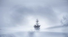 笼罩在美丽中 (JDS Fine Art Photography) Tags: simplicity minimalism winter snow beauty landscape naturesbeauty natural tree birds inspirational spiritual symbolism symbolic elitegalleryaoi bestcapturesaoi