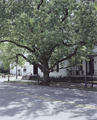 Tree, Maysville, KY (nikolaijan) Tags: plaubelmakina 67 fuji nph400 120 film maysville kentucky tree treeportrait street
