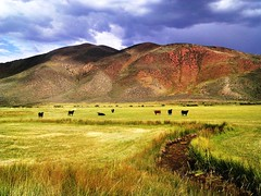 Wyoming Prairie, Home on the Range (moonjazz) Tags: photography american west landscape color range cows wyoming rural hills geology grazing cattle pasture classic homeontherange land conservation usa beauty nature grassland