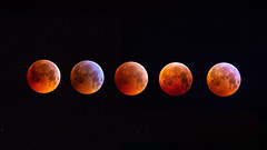 Super Blood Wolf Moon (Dazarazmataz) Tags: blood moon super wolf bloodmoon astrophotography stars night sky eclipse lunar nikon sigma 100400 uk wye