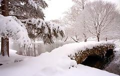 "Cincinnati - Spring Grove Cemetery & Arboretum ""Geyser Lake Bridge"" (David Paul Ohmer) Tags: cincinnati ohio spring grove cemetery arboretum geyser lake bridge winter"