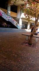 Into the pink. (JoyWPhotography) Tags: pink rosa pinkpetals petals petali trees tree alberi city mycity street streetlife graffiti graffitis graffitiart art arte nature people spring primavera contrasti contrast colors colori