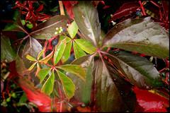 Autumn jungle (Starej Grafik) Tags: autumn nature green