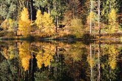 Le miroir de l'eau (Croc'odile67) Tags: nikon d3300 sigma contemporary 18200dcoshsmc forest forets reflexion reflet arbres automne autumn trees étang eaux