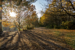 Horsell Common (alexjorgejackson) Tags: horsell common surrey woodland woods england uk reflection light sunlight golden hour autumn sony alpha a6000 sigma 16mm f14