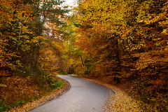 Autumn Road (Landstre1cher) Tags: yeallow leaves germany road red autumn nature landscape afternoon trees green spessart fall orange buchberg