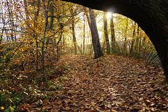 Croydon (Neil Pulling) Tags: croydon london addingtonhills autumn england uk trees