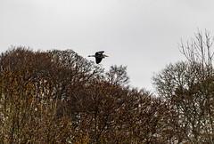 Heron (Mal.Durbin Photography) Tags: wildlifephotography maldurbin naturephotography wildbirds forestfarm nature naturereserve