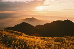 https://www.instagram.com/kaku_foto/ (カク チエンホン) Tags: film fuji contax g2 taiwan taipei travel sunset 陽明山 大屯山 芒草