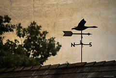 Heading south....HSS!!! (Joe Hengel) Tags: headingsouth lowerslowerdelaware lsd lewes lewesde delaware de sussexcounty weathervane trees roof shingles northandsouth north south texture hss happyslidersunday slidersunday slider sunday