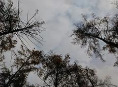 IMAG0905 (agnieszka.lublin) Tags: autumn fall november tree wood landscape park outdoor field dawn clouds sky birds nature