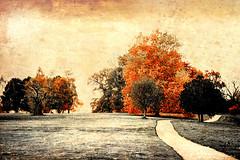 Awesome autumn park ... (Julie Greg) Tags: autumn autumn2018 nature nautre park colours canon texture tree trees way england kent