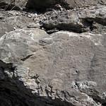 Limestone (Warix Run Member, Slade Formation, Upper Mississippian; Clack Mountain Road Outcrop, south of Morehead, Kentucky, USA) 1 thumbnail