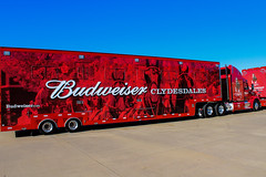 IMG_0576 (AndersonCounty,SC) Tags: plugintoanderson andersonsc budweiser clydesdales