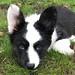 Finn Cute Puppy Portrait