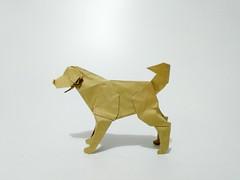 拉布拉多 (guangxu233) Tags: paper art paperart paperfolding handmade origami origamiart dog 折纸 折り紙 折り紙作品