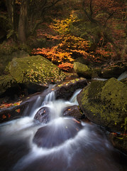 A Splash of Colour (kieran_metcalfe) Tags: wood autumn landscape naturallight nature water stream sapling peakdistrict fall motion woodland leaves trees outside flow waterfall outdoor forest intimate longexposure movement cascade countryside brook gorge valley