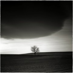 (una cierta mirada) Tags: sunset landscape bnw blackandhwite sky tree dark stormy storm earth nature