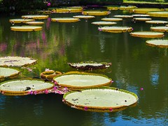 OM170683 Bali Royal Bathing Pools (Dave Curtis) Tags: bali water lilies 2014 em5 may omd olympus