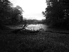 Inlet B&W (WabbitWanderer) Tags: cootesparadise cootes conservation wilderness hamilton ontario blackandwhite inlet boggy water