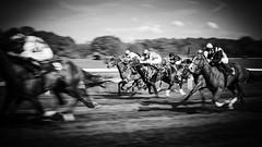 Attack (Tom Levold (www.levold.de/photosphere)) Tags: afsdxnikkor18105mm afsvrzoomnikkor70300 cologne d700 köln nikon race racetrack rennbahn bw sw jockeys pferde horses