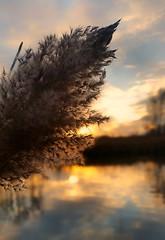A spot of sun (ossington) Tags: sunset parks ponds plants