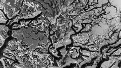 DSC_3342-Pano: Snow Covered Old Oak Tree (Colin McIntosh) Tags: highclere snow focus manual winter oak tree nikon d610 28mm ais f28