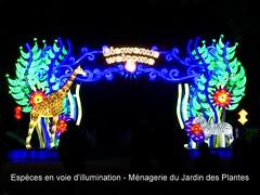 Espèces en voie d'illumination (Raymonde Contensous) Tags: jardindesplantes ménageriejardindesplantes festivaldeslumières espècesenvoiedillumination paris lanterneschinoises expositions insolite vidéo clip diaporama nature