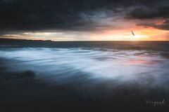 Seascape qui s'envol (viezuel974) Tags: mer sea seascape rocher oiseaux oiseau bird birds soleil coucherdesoleil 974 réunion iledelareunion iledelaréunion lumix