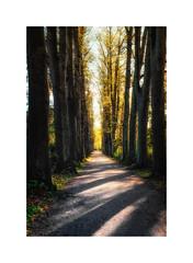 Eutin IV (Passie13(Ines van Megen-Thijssen)) Tags: deutschland holsteinerschweiz eutin laan trees germany fujifilm x100f inesvanmegen inesvanmegenthijssen