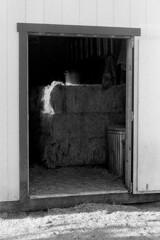 Happiness Is . . . (squirtiesdad) Tags: little barn hay early morning sunlight pentax spotmatic sp super takumar 55mm f18 diyselfscanning selfdeveloped epson v600 monochrome blackandwhite bw bn analog analogue arista aristaedu iso100 35mm film