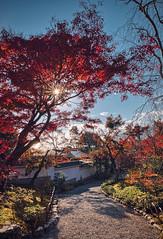 Tenryuji Temple Garden (bacon.dumpling) Tags: arashiyama autumn fallfoliage fujifilmxpro2 fujinonxf16mmf14rwr japan koyo kyoto leafchangingseason tenryujitemplegarden