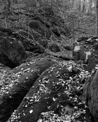 (str.ainer) Tags: forest rocks wood leaves autumn wald felsen laub herbst schwarzweis bw film linhof schnider kreuznach symmars ilford fp4 adox fx39 hugin gimp sp445 4x5 largeformat