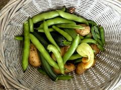 Fresh Vegetables (camerapoetry) Tags: fresh handpicked garden vegetables basket broadbeans courgettes potatoes homegrown briston norfolk uk words images poem poetry food photography