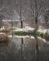 frosty day (hjuengst) Tags: winter winterbeauty frost frosty snow schnee tree bäume munich spiegelung reflections münchen