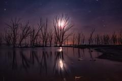 Epecuen (karinavera) Tags: longexposure night photography ilcea7m2 buenosaires epecuen argentina tree sky dry lake stars