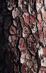 Tree bark (lebre.jaime) Tags: portugal beira covilhã jardimbotânicodemontanha film analogic tree bark abstract fujifilm c200 film135 conta g2 sonnar 9028 epson v600 affinity affinityphoto