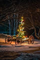Christmas Wagon (coleenr2005) Tags: christmas christmastree lights winter snownight snow tree