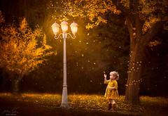 Golden Light ({jessica drossin}) Tags: jessicadrossin portrait lantern lights tree leaves fall autumn gold toddler child magic falling seasons tiny scale pretty wwwjessicadrossincom