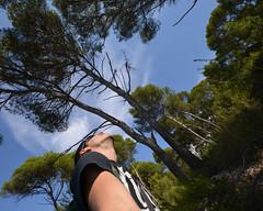 14. Pinares de Menorca en uno de sus senderos (Diario de un Mentiroso) Tags: menorca