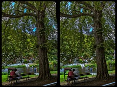 Bode river fording 3-D / CrossView / Stereoscopy (Stereotron) Tags: sachsenanhalt saxonyanhalt ostfalen harz mountains gebirge ostfalia hardt hart hercynia harzgau treseburg altenbrak bode bodetal flus river furt deutschland germany europe cross eye view xview crosseye pair free sidebyside sbs kreuzblick bildpaar 3d photo image stereo spatial stereophoto stereophotography stereoscopic stereoscopy stereotron threedimensional stereoview stereophotomaker photography picture raumbild twin canon eos 550d remote control synchron kitlens 1855mm 100v10f tonemapping hdr hdri raw