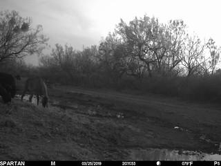 2019-03-25 20:11:53 - Crystal Creek 2