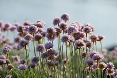 Wildflowers (beatawozniak1968) Tags: naturephotography nature plant flowers flora meadow wildflowers macro closeup