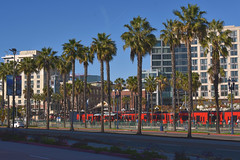 Hilton and Hardrock... (Sue on a bike) Tags: 365the2019edition 3652019 day19365 19jan19 hotels downtown sandiego california gaslampquarter palmtrees lightrail red trolley