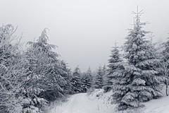 Am Feldberg im Taunus (nordelch61) Tags: deutschland hessen heimat mittelgebirge feldberg oberursel winter schnee wald frost bäume blätter taunus baum holz