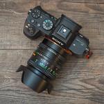 Sony a7RII + Minolta Rokkor 50mm 1:1.4 thumbnail